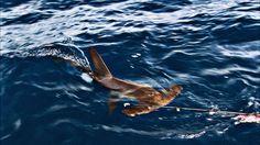 31d623a21701d 12 Best Sharks and Shark Finning images