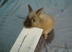 Bunny envelope opener. Coelho a abrir os cheques dos pensionistas.