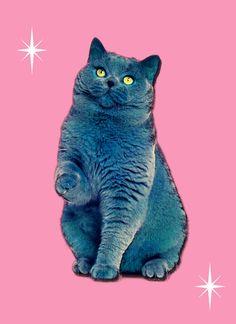 Submitted by misskittymunster! Stardust kitty