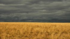 Mongolian Steppe in the eastern region of Dornod --  one of the world's last great grassland ecosystems.  by Jeff Kerby