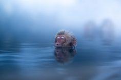 Snow Monkey Enjoys a Warm Soak in Hot Spring, Jigokudani, Japan Jigokudani Monkey Park, Japanese Hot Springs, Snow Monkey, Popular Culture, Screen Shot, Animal Kingdom, Beautiful Pictures, Wildlife, Nature