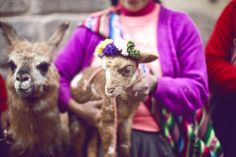traditional Inca woman of Peru with a baby lamb by Making Magique, via Flickr