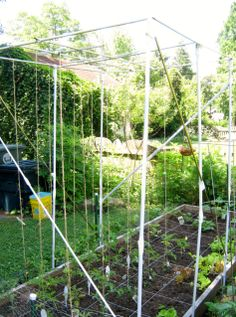 Make a trellis out of household discards