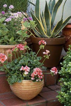 728 best container gardening images in 2019 gardening trough rh pinterest com
