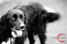 #doggie #photography #pets