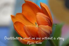 Gratitude is what we are without a story - Byron Katie
