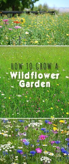 How to Grow a Wildflower Garden ...♥♥... Here's how to get started and how to keep your wildflower garden gorgeous!