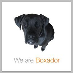 Black Lab + Boxer = ♥ Love my Boxador! Mans Best Friend, Best Friends, Egyptian Mau, I Like Dogs, Boxer Love, Love Me Forever, Dogs And Puppies, Doggies, Four Legged