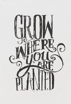 Grow where you are planted - Beautiful Picture Quotes @mobile9 | #motivational #typography #inspirational Daily Quotes, Great Quotes, Quotes To Live By, Inspirational Quotes, Words Quotes, Wise Words, Me Quotes, Famous Quotes, Typography Letters