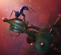 #hormiga de la fotógrafa malaya Lee Pei Ling