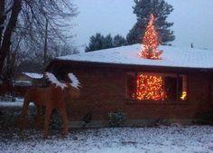 大きなクリスマスツリー01