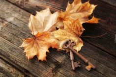 Liście, Klon, Jesień, Klucze, Deska Leaves, Texture, Wood, Crafts, Hd Images, Orange, Yellow, Style, Wallpapers
