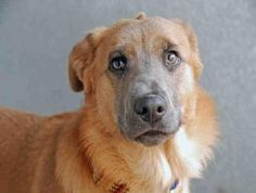 Dog on death-row after losing his owner in Hurricane Sandy storm: Interested adopters please step forward