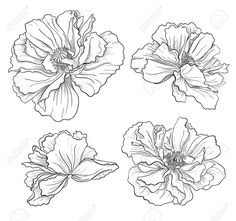 Image result for black and white flower sketch