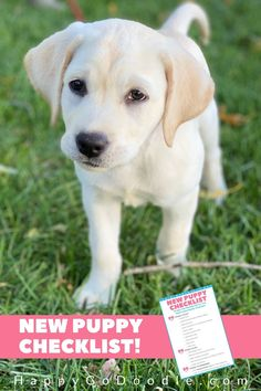 Wondering what to include on your new puppy shopping list? With this FREE new puppy checklist printable, we've got you covered. Little Puppies, Cute Puppies, Cute Dogs, New Puppy Checklist, Puppy Shampoo, Puppy Supplies, Gotcha Day, Puppies Tips, Group Of Dogs