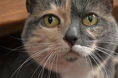 #Cat #Adorable #Pet