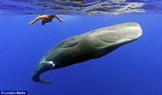 New information reveals that chemical contaminants, some linked to plastics, are being absorbed by sperm whales.  Plastic has the ability to degrade into smaller and smaller pieces that attract  and adsorb surrounding toxins such as DDTs. When mistaken as food by smaller animals, the toxic plastic pieces can bioaccumulate and move up the food chain as larger and larger animals consume them. Killing whales, fish and birds! STOP using single-use plastic bags!