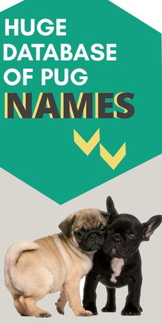 I've created huge database of male, female dog names. Whether you're looking for unique, Disney, cute or funny names, you can find..