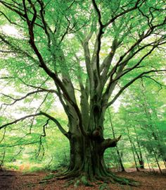 The best time to plant a tree is twenty years ago. The second best time is now. (Chinese proverb)