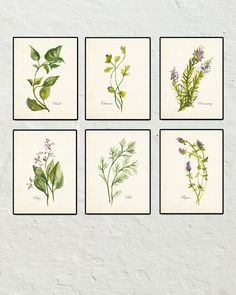 Watercolor Herbs Set No. 2 - Botanical Print Set - Printed on archival canvas - Makes a charming vintage display - Multiple Sizes - Free US Shipping – Belle Maison Art