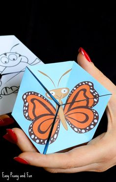 Cute Butterfly Life Cycle Paper Toy