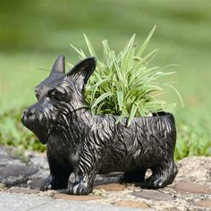Scotty Dog Planter Currently Available at the Eleventh Hour in Rochester NY