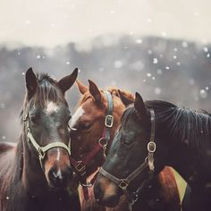 https://www.etsy.com/listing/116096290/snowing-on-horse-photography-nature?ref=shop_home_active_1 (Photo by LL Ruth)