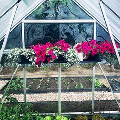Szklarnia Palram. W szklarni nie muszą rosnąć tylko warzywa. Mogą ją ozdabiać również piękne kwiaty 😀