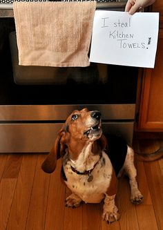 Dog Shaming website. I love it! Paisley and Blue are definitely going to make this site