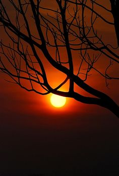 the naked tree #sunset