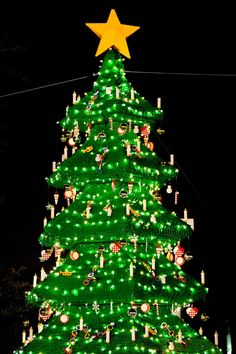 "30-foot-tall LEGO Christmas tree made with a combination of 270,000 forest green LEGO and DUPLO® bricks. The season's first official tree lighting during the LEGOLAND Florida Christmas ""Bricktacular"" ceremony will be held Nov. 29 at 5 p.m."