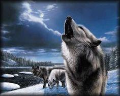 Lobo uivando e noite com neve