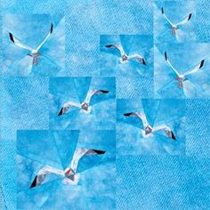 silver linings quilting pattern seagull flock