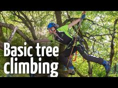 This is a basic Arborist tree climbing technique for ascending a tree safely with many branches, using a combination of rope throwing and climbing to ascend . Climbing Tree Stands, Tree Arborist, Animated Knots, Climbing Technique, Rope Climbing, Chainsaw Mill, Tree Felling, Bushcraft Camping, Gardens