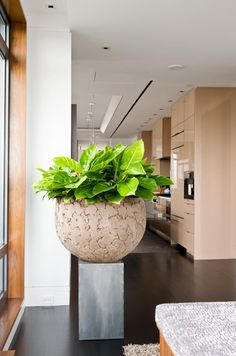 Vibrant greens complement any neutral indoor pot. Garden design: Winston Flowers. Photo credit: Rosemary Fletcher.