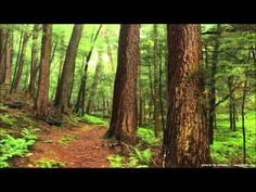 Rainy Day in Mountain Forest - 2 Hours Relaxing - Full HD Pure Nature Video - ASMR & BINAURAL - YouTube