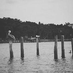 #enjoying life on the #boat today.  #altezvacations #beach #siestakey #intercoastal #florida #vacationgetaway #vacationrental #vacationmemories #boatlife