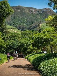 Constantia winelands   Ebike Tours Cape Town Green Belt, Table Mountain, Cape Town, Old Things, Country Roads, The Incredibles, Tours, Urban, Landscape