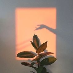 Plants aesthetic light 34 Trendy ideas – Photography – … – Best Home Plants Aesthetic Light, Orange Aesthetic, Aesthetic Beauty, Aesthetic Plants, Fotografia Retro, Jolie Photo, Light And Shadow, Aesthetic Pictures, Wall Collage