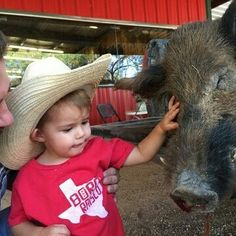 Makin' a wild hog friend.