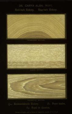 Color - Wood sample -  (21)