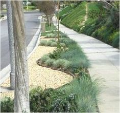 Drought Tolerant Landscape - Parkway 2 resize Name of plants & planting guide for DIY landscape design ideas.