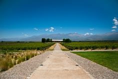 https://flic.kr/p/hbVnjp   Wine Path   @ Luján de Cuyo, Mendoza, Argentina, South America.