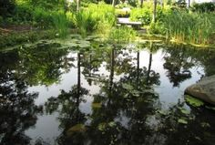 """""""Reflections"""", by Lesley Brown taken at the Botanical Gardens, Boothbay, ME"""