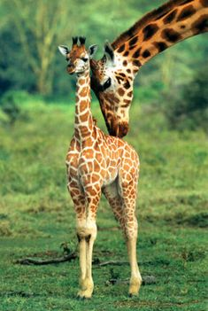 Eu me sinto uma mamãe girafa com o meu filhote!