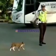 Traffic Police Helping this cute cat - Super Cute Animals, Cute Funny Animals, Cute Baby Animals, Funny Cute, Animals And Pets, Cute Cats, Kittens Cutest, Cats And Kittens, Animal Antics
