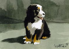i've decided K's first dog should be a bernese mountain dog (okay, or probably a lab-mix)