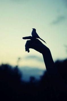 birdyyy