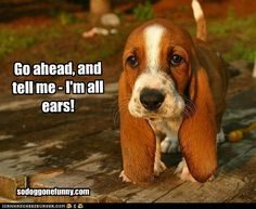 My name is Coppper, im a hound dog. aww!!!