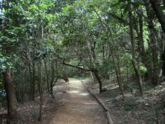 forest footpath - Google Search